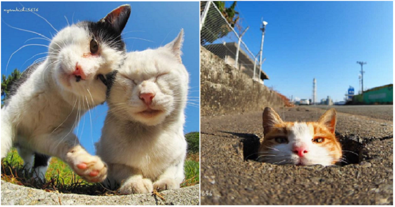 A Japanese photographer captures great shots of cats living their best lives. https://t.co/KAp6XaBbSx