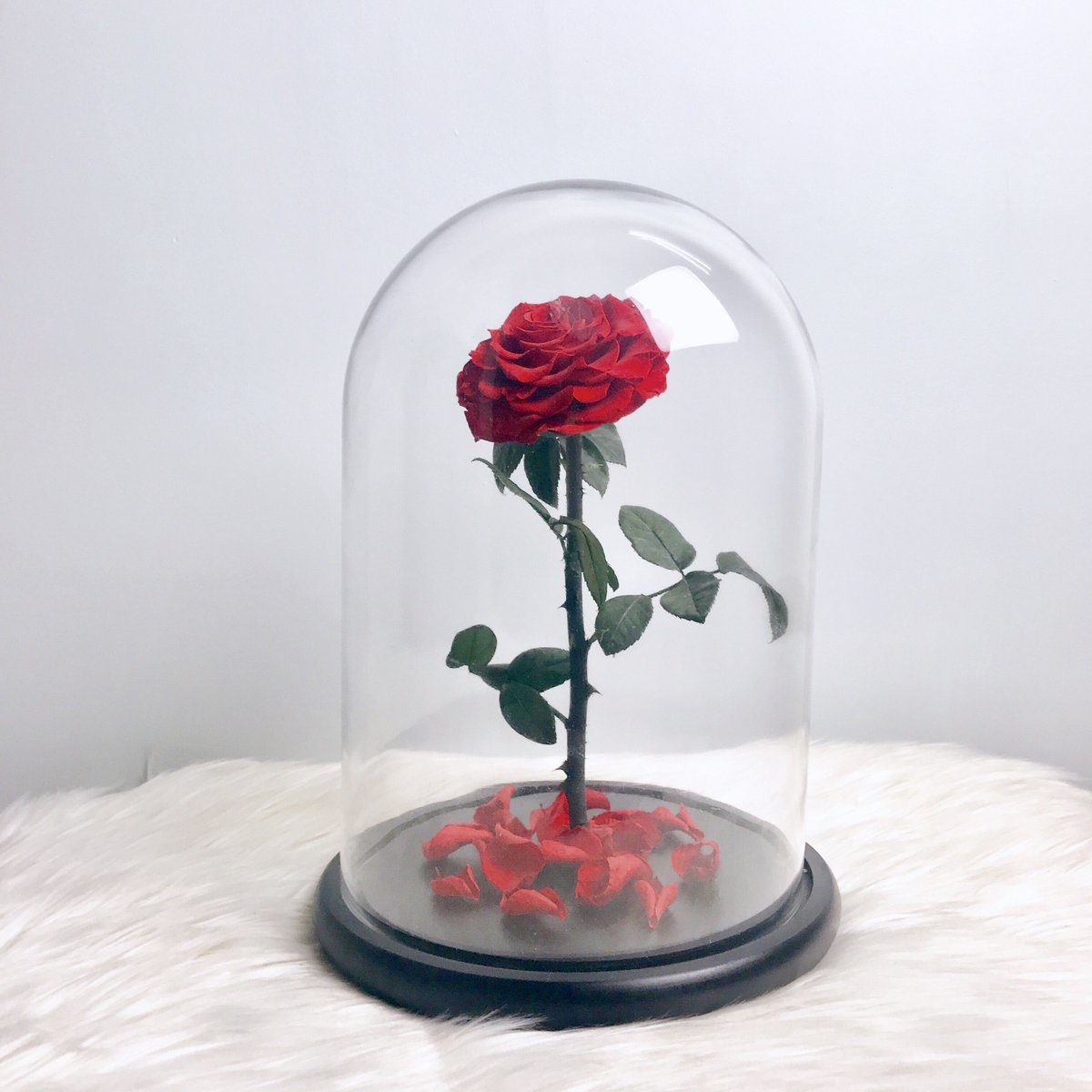 Looking for roses to last 365 days of the year? Stop searching and click here https://t.co/R2if6Rt1Hw  @champsfleur_in