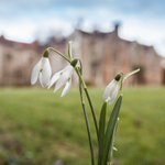 Image for the Tweet beginning: On Sunday, Chawton House is