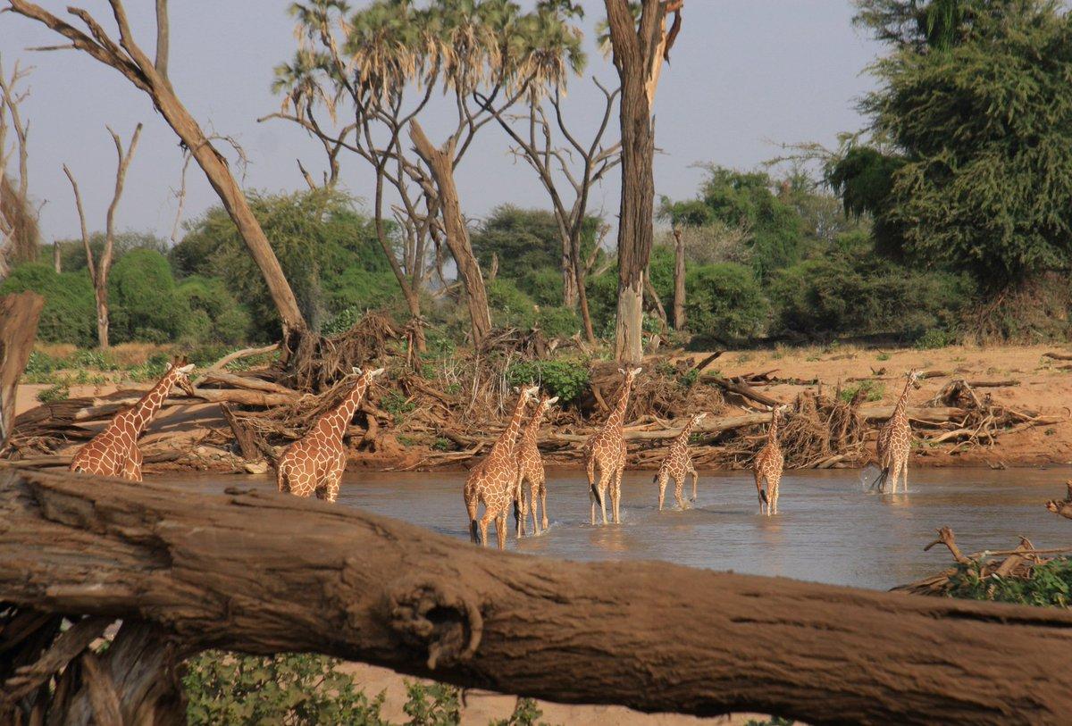 Shaba wildlife