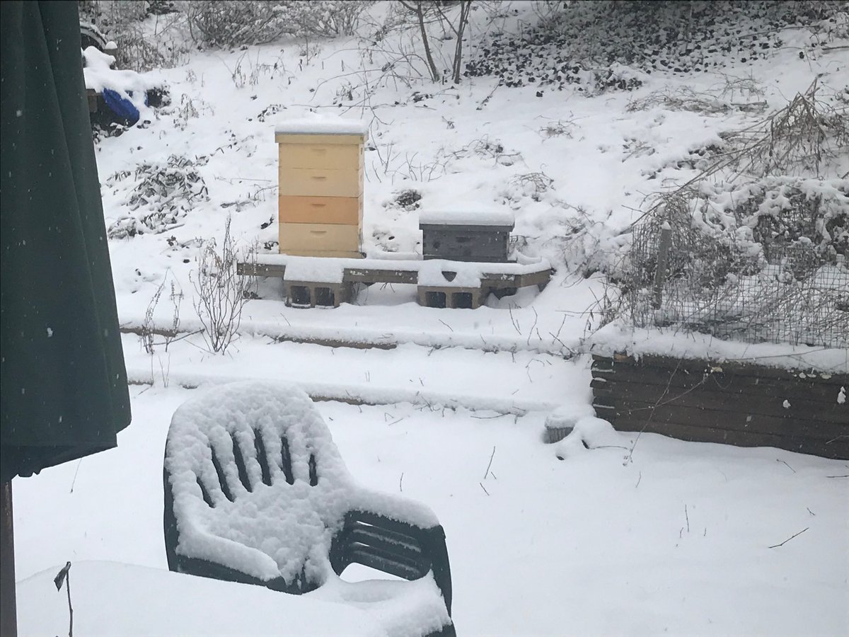 Beehives Fairfax #WUSA9Weather <br>http://pic.twitter.com/MhyYy1jQNu