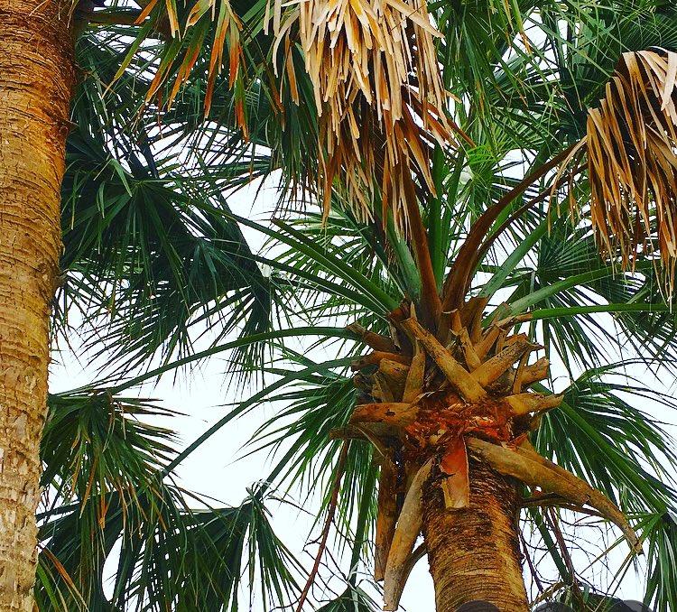 RT @RukavinaJacob: Wish I could sit under these palm trees forever. #palmtree #vacation https://t.co/yxwFj53VTI