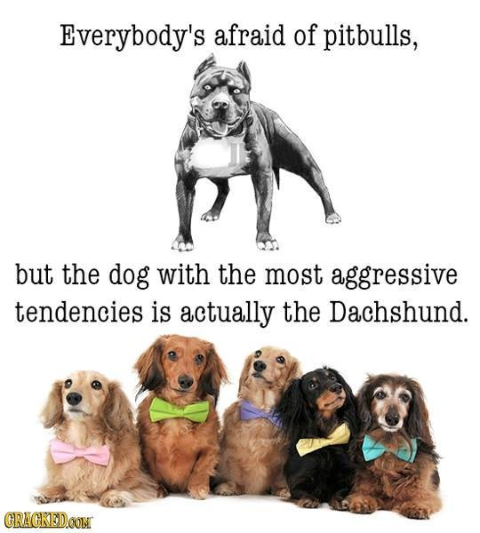 Beware Of Wiener Dog! 20 Famous Stereotypes That Are Statistically B.S. -https://t.co/2qWf8YapRw