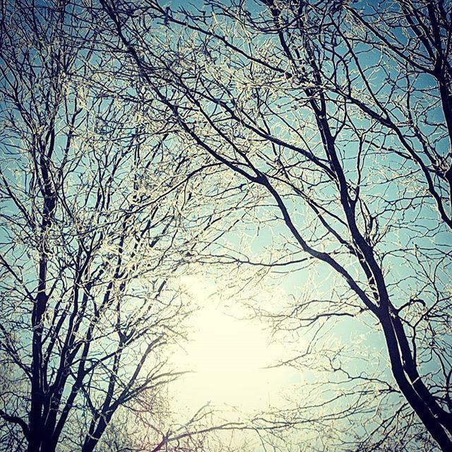 Eye of Providence.  #nature #naturephotography #weather #winter #ice #cowx #colorado #tree #treephotography #amateurphotography #sun #sky #skyphotography https://ift.tt/2ElTdMG