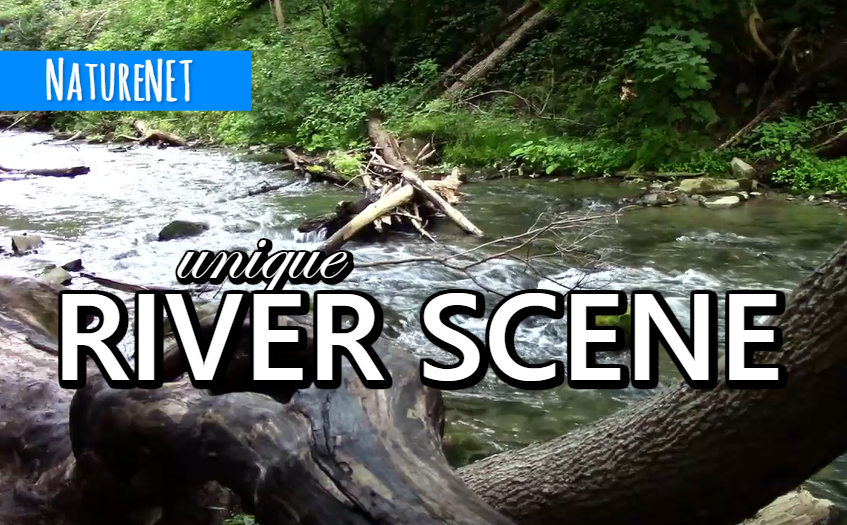 Fast Moving River | Relaxing Nature Sounds https://buff.ly/2TW5ooA  #nature #sleep #relax #chill #river #meditate #nap #study