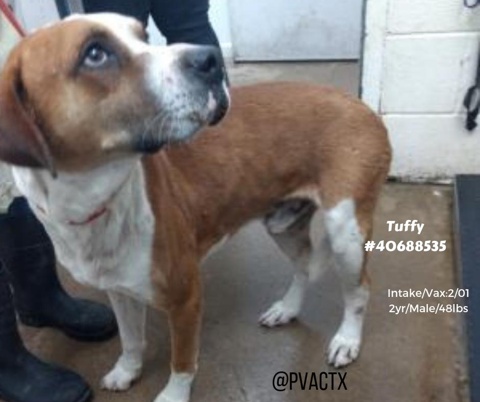 TUFFY looks terrified , who wouldn`t if you are dumped at #KillAnimalCenter #TX #PalmValley #Edinburg ⁉️Stated to have behavior issues with other #dogs & has kennel cough , again a #sick #dog with a deadline to leave #Facility 😡😭 2/21 by 11 am ⌛️https://www.facebook.com/pvacrescue/photos/a.790661434336930/2083225841747143/?type=3&theater… #SaveMe