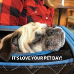 Image for the Tweet beginning: It's love your pet day!