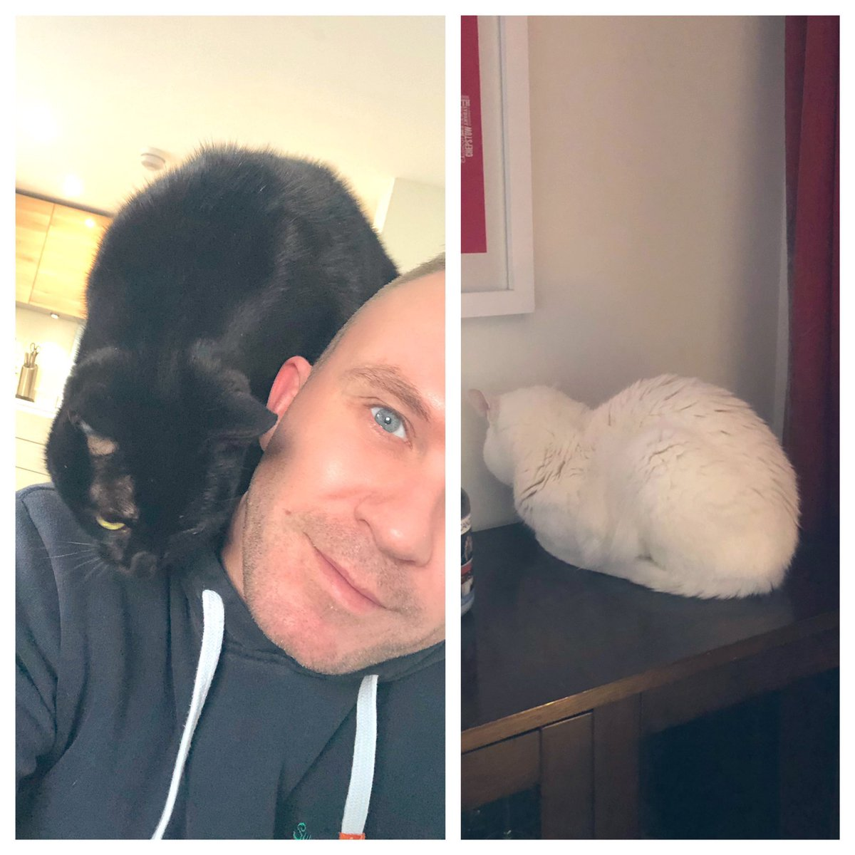 Apparently it's #LoveYourPetsDay so here's my two rescue #CatsOfTwitter - Peddie who thinks he's a parrot and Colin who faceplants into walls! What's not to love? They're weird and wonderful just like me and their other daddy!