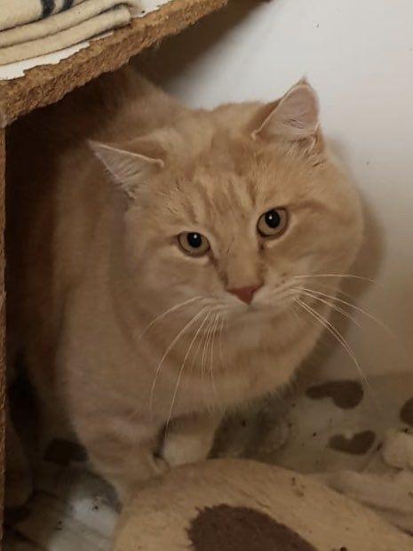George is modelling his magnificent whiskers for #WhiskersWednesday! We can't believe no one has snapped him up yet. Please #AdoptDontShop today!