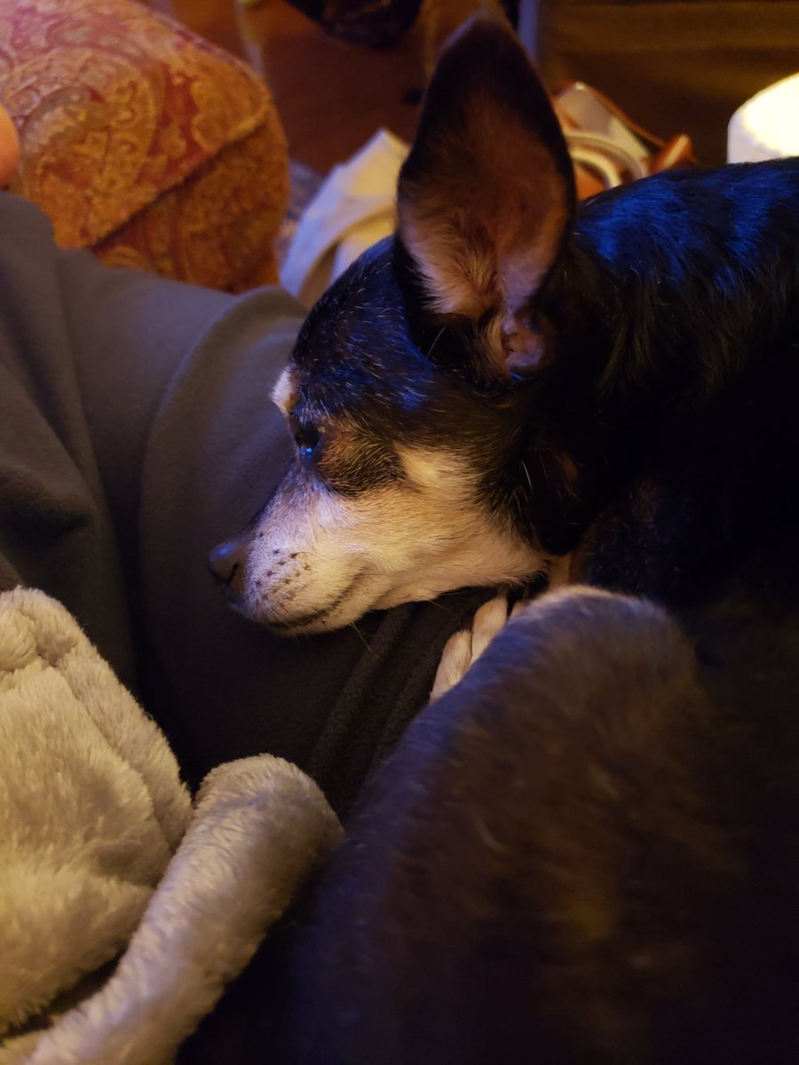 This old man is 15 and too old to play in the snow, be he makes a good snuggle buddy for my mom recovering from hip replacement #WUSA9Weather <br>http://pic.twitter.com/mQRnlJVNsB
