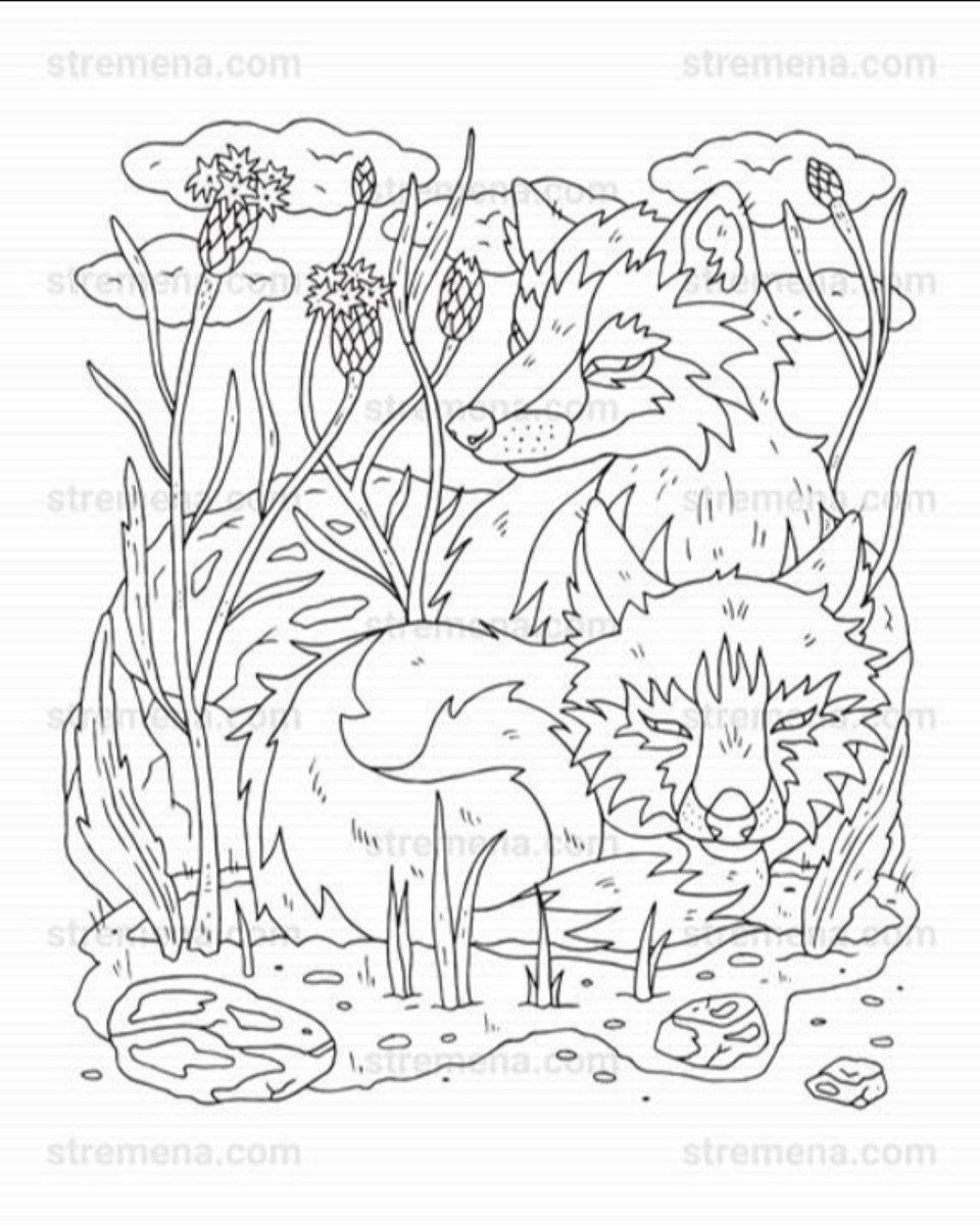 bilder zum ausmalen wolf