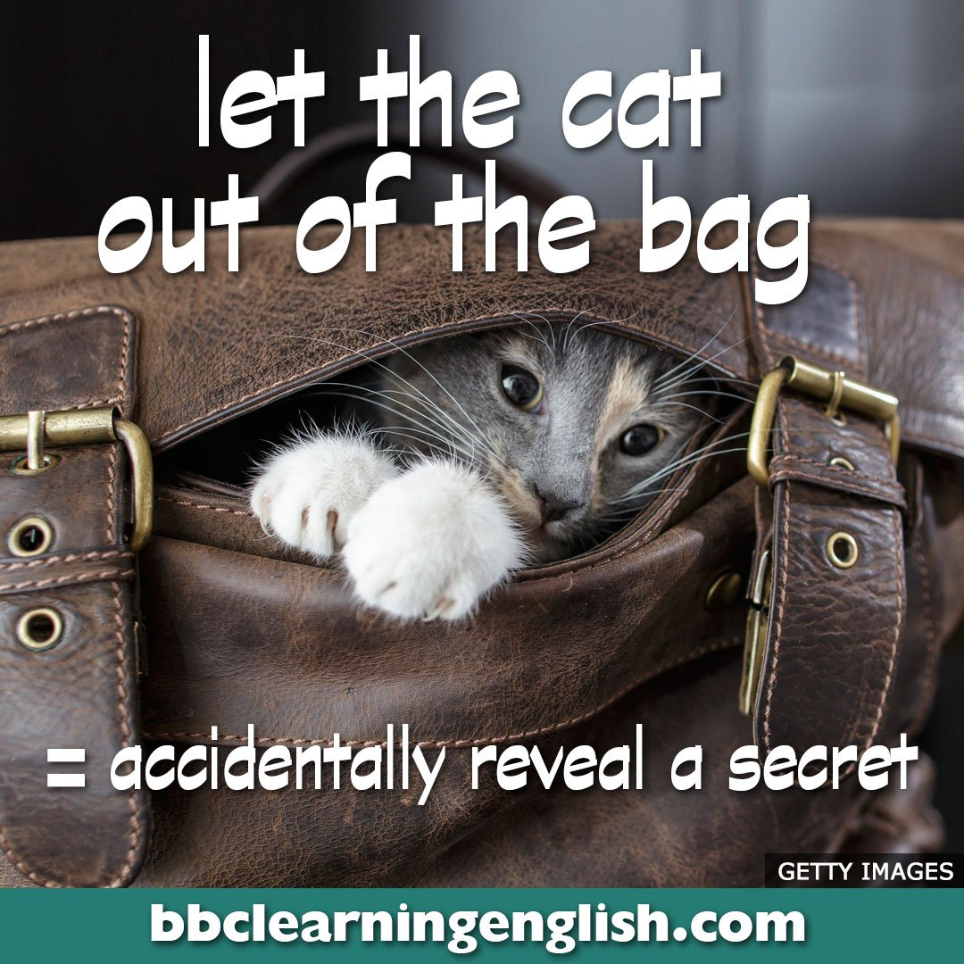 😺Have you ever let the cat out of the bag? 😹It happens frequently! Look at this post to see what we mean. 😸And here's a link to more idiom images: https://bbc.in/2E0bYne 😻Oops! I let the cat out of the bag there! Forget I said anything.😉  #bbclearningenglish