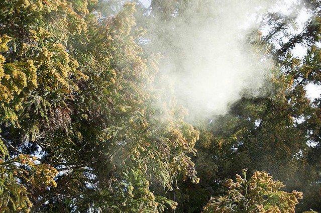 【つら…】花粉の飛散量、前年比「東京4倍」「神奈川5倍」の見通し https://t.co/MkkISQpLnQ  今年の飛散量は前年比で群馬6.83倍、長崎3.13倍などと予想され、全国的に前年を大きく上回る見通しという。