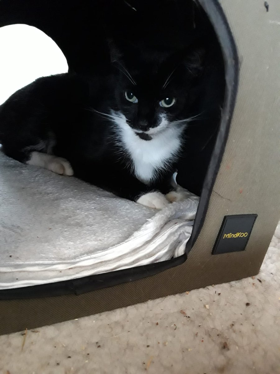Dear all, welcome Karl. He's under a year old and such a lovely dude!!! Love him to bits already #Adoptdontshop #rescue #Yorkshire #rescuecats #fursday