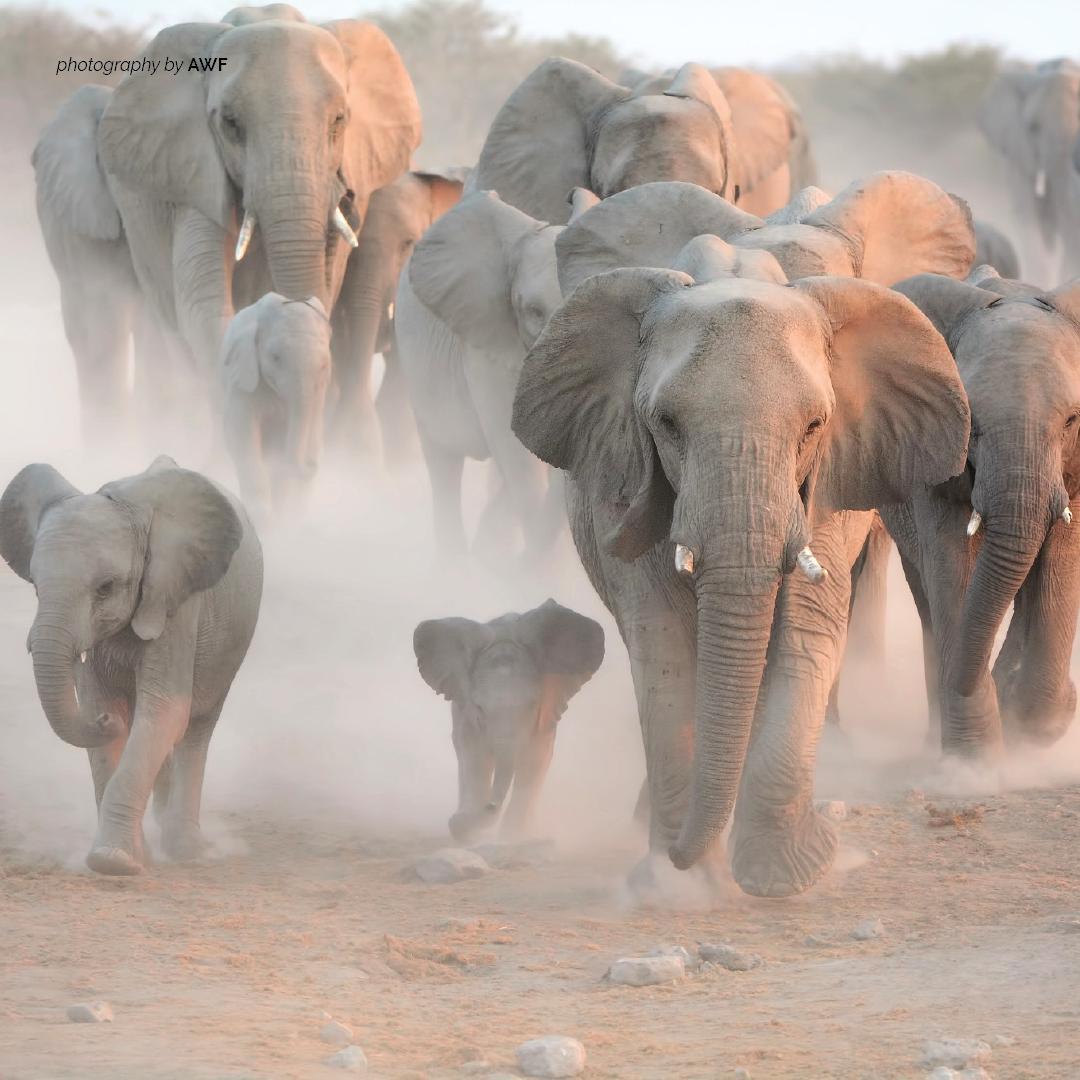 Elephants are a matriarchal society