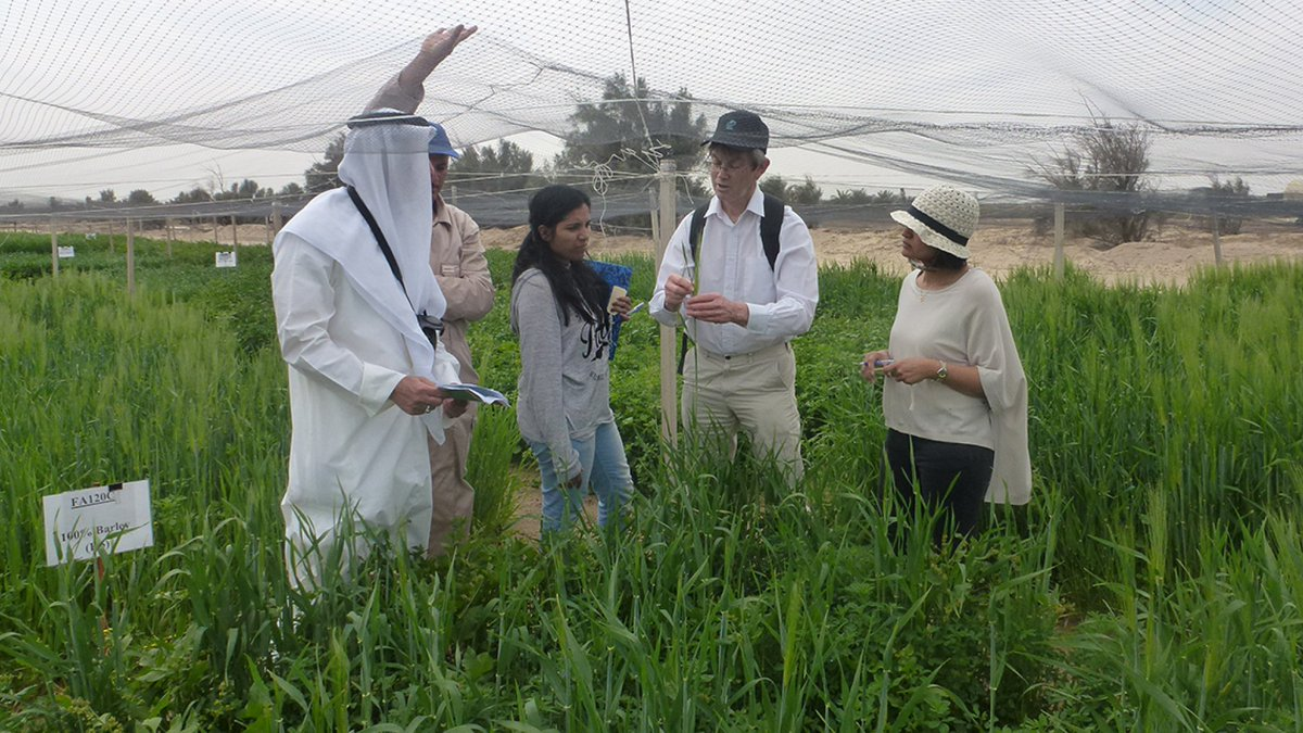 Barley is a grain widely used in bread, animal feed and health foods. #Kuwaiti scientists are using safe doses of radiation to improve barley plants for local food production and exports. 📝  https://t.co/Extb0HPjCq