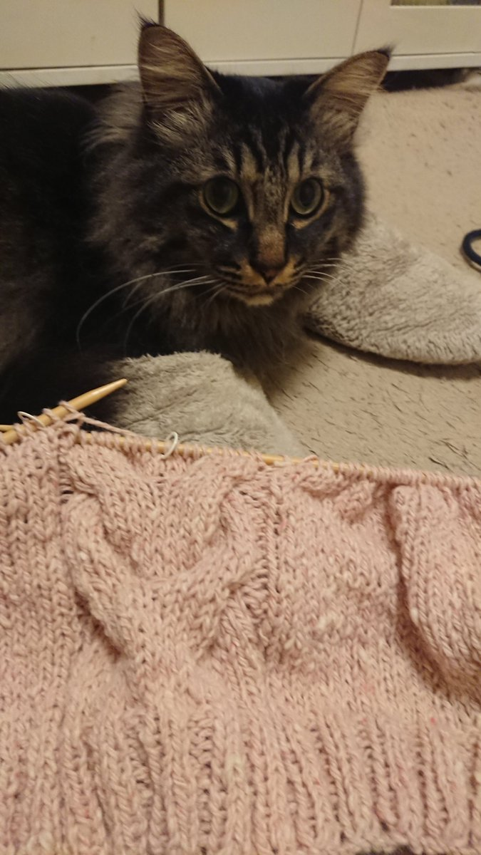 るぅちゃんと、簡単セーター、まったり、幸せな時間(⑅˘͈ ᵕ ˘͈ )💓💓  #今編みたいニット