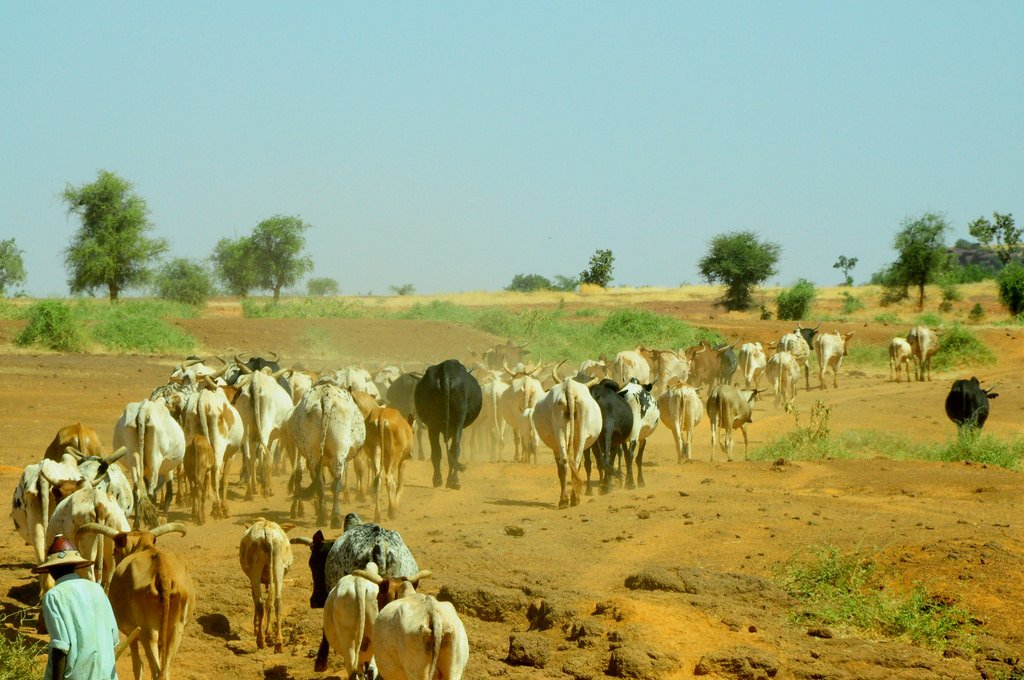 #africap focal country #Malawi is among first in Eastern Africa to join the @GRA_GHG. Priority is developing low-emission livestock systems as part of climate #resilience efforts @CisanetMalawi