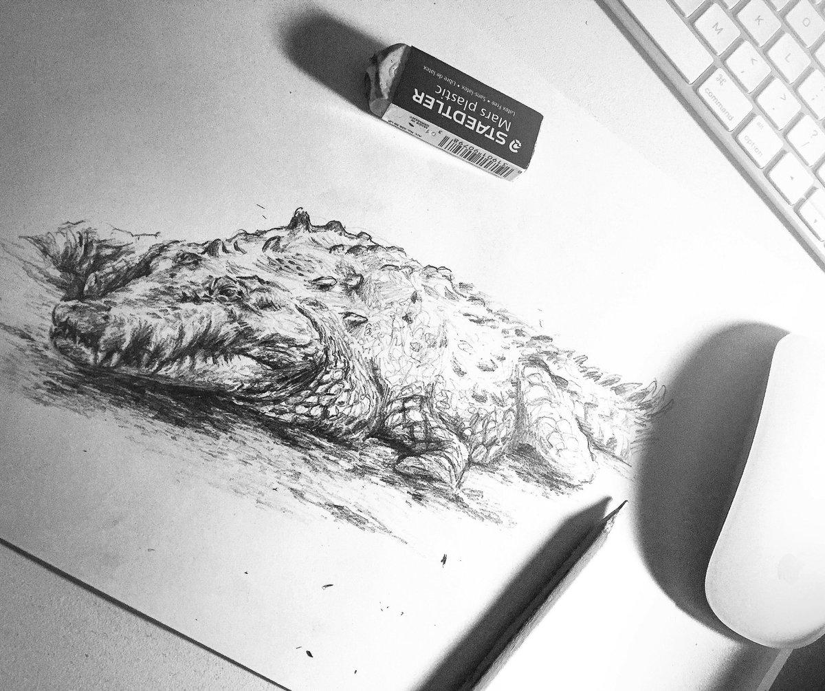 Black and white. Crocodile pencil sketch.