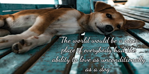 &quot;The world would be a nicer place if everybody had the ability to love as unconditionally as a dog&quot;  #ThursdayThoughts <br>http://pic.twitter.com/3o32iPDgyb