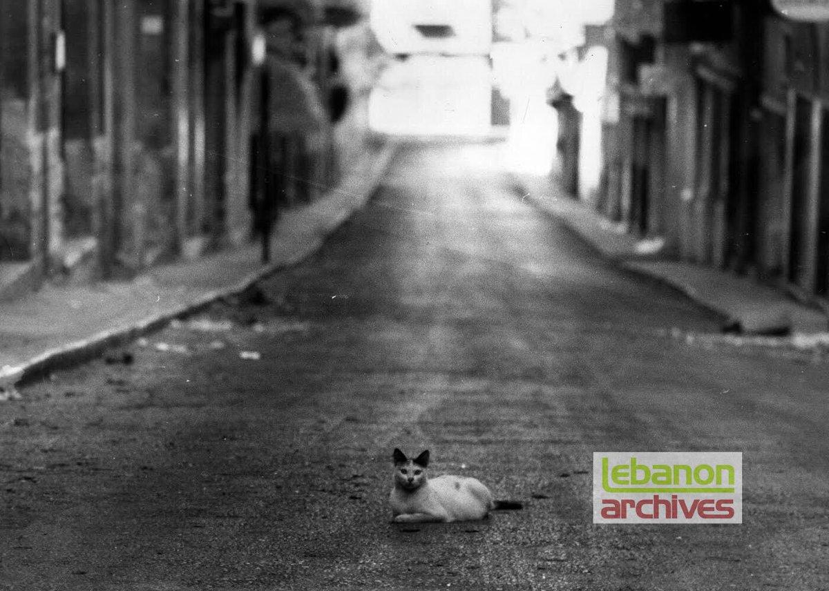 ٤: شارع جورج بيكو خالي خلال الأشتباكات بإستثناء قطة إحتلت عرض الشارع-تشرين الأول 1975