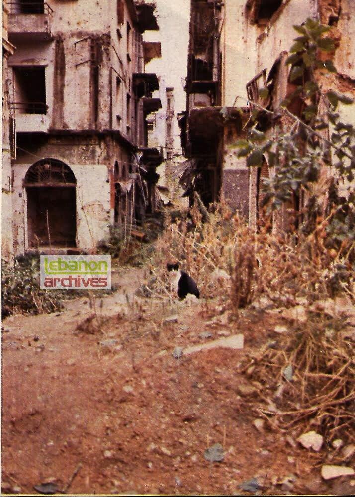 ٥: الدمار في سوق الفرنج وتبدو قطة وحيدة تنظر الى حجم المأساة-أيلول 1977