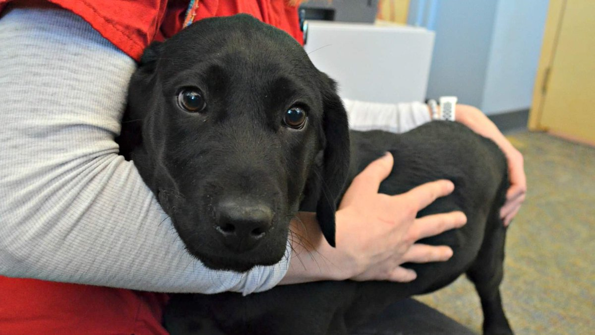 This scared baby has NO business being in a UTAH kill Shelter headed for a Gas Chamber! GENIE #373 - not even 4 mths - a lab/ret Male pup. We can&#39;t let him die for no space! If you can&#39;t adopt, FOSTERING will save his life!  https:// m.facebook.com/story.php?stor y_fbid=321778552017833&amp;id=317771332418555 &nbsp; …  #Adopt #Foster #Rescue #Pledge<br>http://pic.twitter.com/vY2suS49Vg