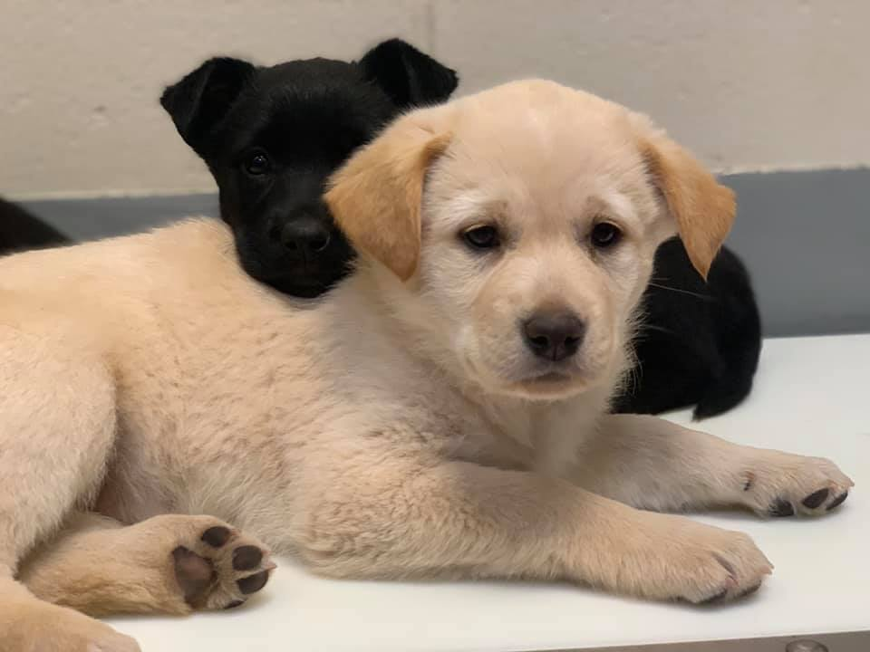 We've got puppies, yes we do! We've got puppies, how 'bout you? Visit Milly, Ruth and their 4 siblings today at the @HSNT1 Keller Regional Adoption Center here at PD!