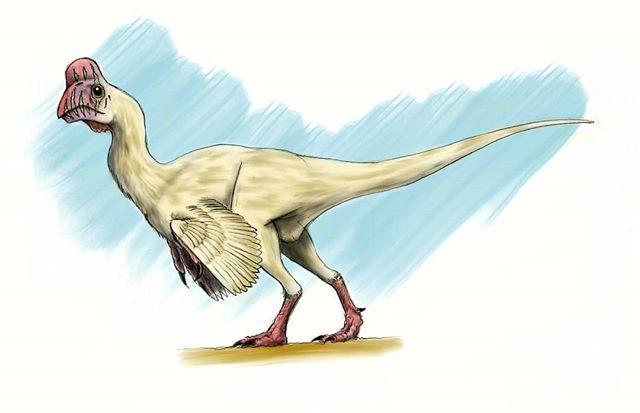Ezequiel Vera No Twitter Oviraptor Dinosaurs Dinosaur Dinosaurio Citipati Khaan Https T Co Tsvzvaug9z It lacked teeth, but it did have. oviraptor dinosaurs dinosaur