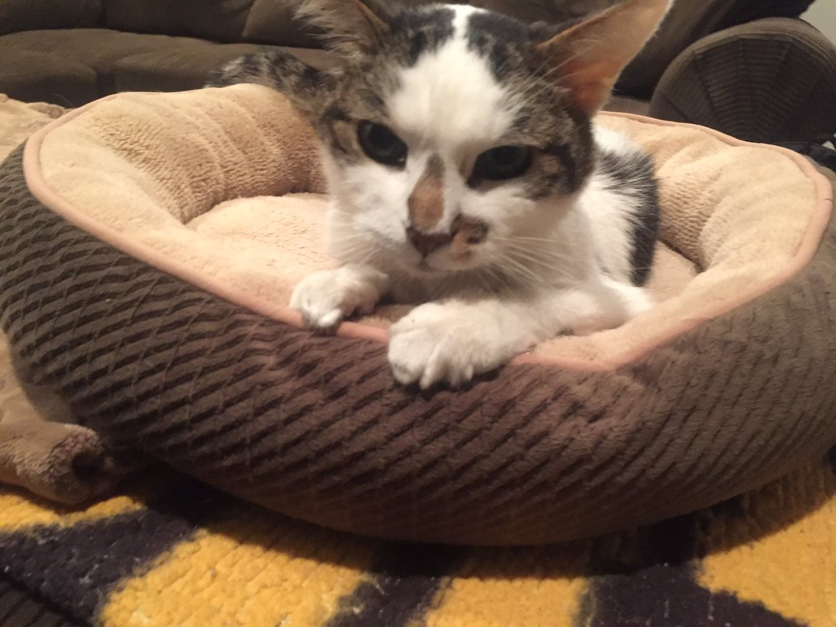 """On #LoveYourPetDay we say goodbye to our """"Buddy"""". You were one cool cat. <br>http://pic.twitter.com/nvz3YzapBh"""