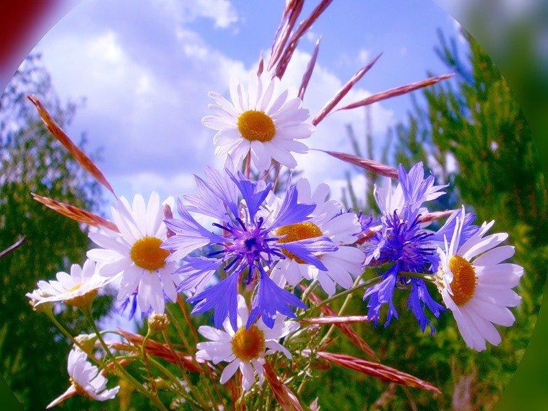 Открытка полевые цветы добоое утро