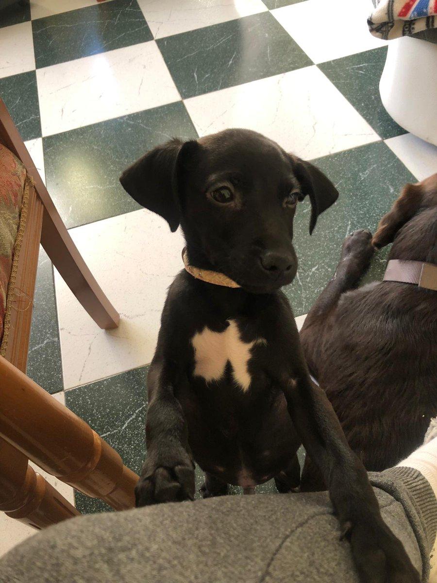 #AdoptaNoCompres #FelizFinde #adopta #adoptdontbuy #URGENTE #Dog #Huelva #Espana
