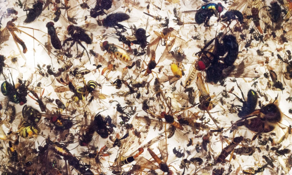 Plummeting insect numbers threaten 'catastrophic collapse of nature', finds first global review   - rate of extinction is 8x faster than for vertebrates   - data suggest they could vanish within a century  Exclusive, by me  https://www.theguardian.com/environment/2019/feb/10/plummeting-insect-numbers-threaten-collapse-of-nature…