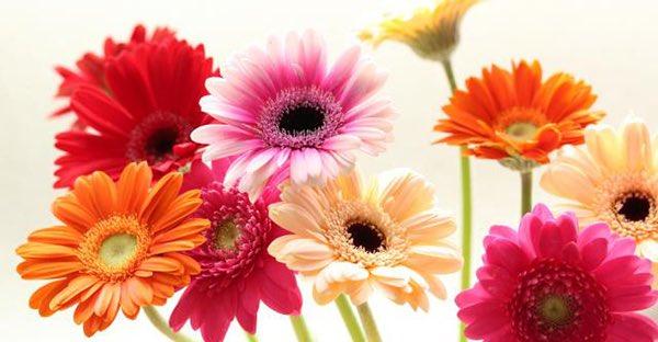 みやのすみれ's photo on 心の花
