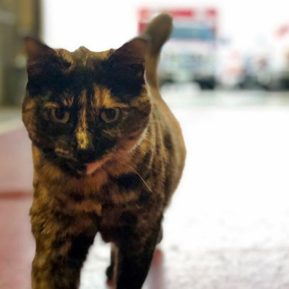 SF fire station says they're being asked to get rid of their beloved cat. But they want her to stay. http://dlvr.it/QybtNq