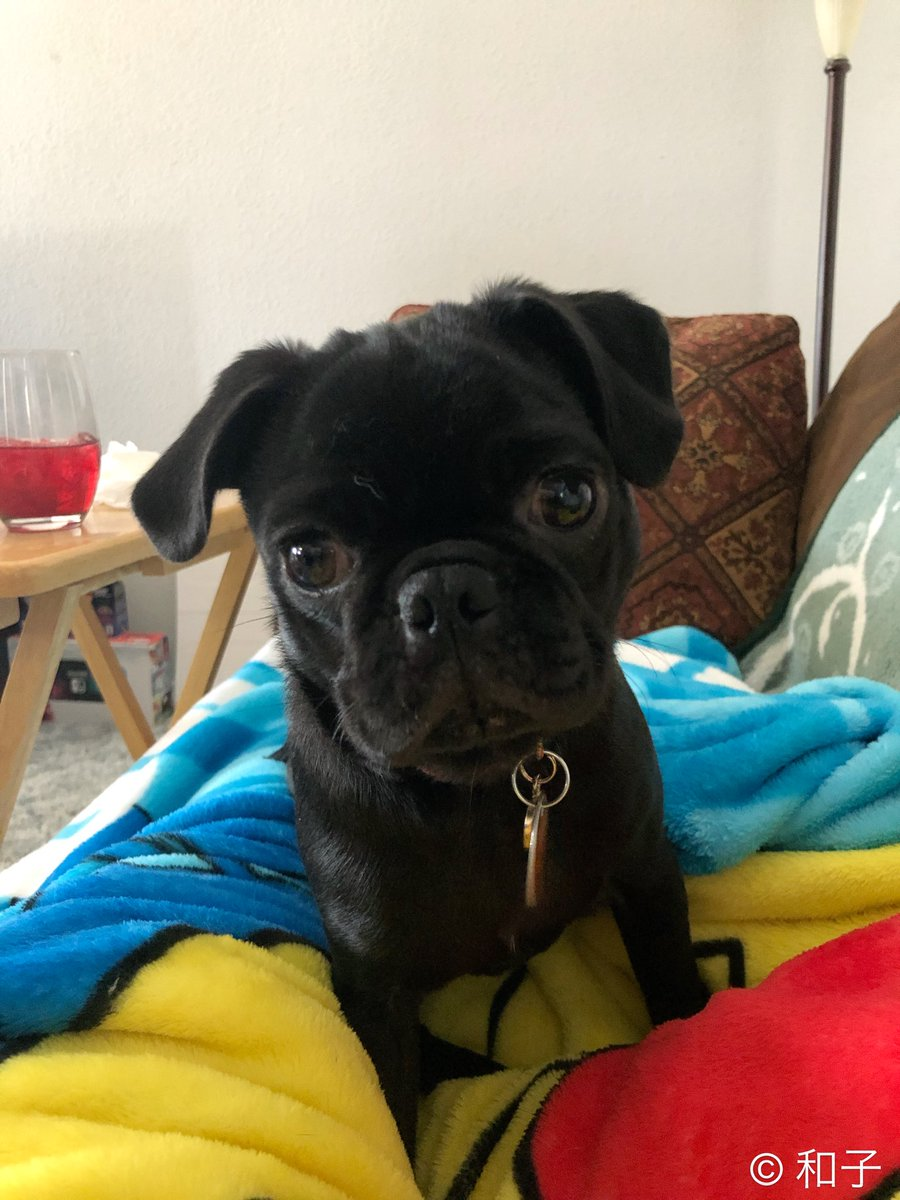 While lying on the couch watching &quot;Blade: Trinity&quot;, this is my view right now. #puglife #Mochi #puppylove  <br>http://pic.twitter.com/xsGXH1m24X