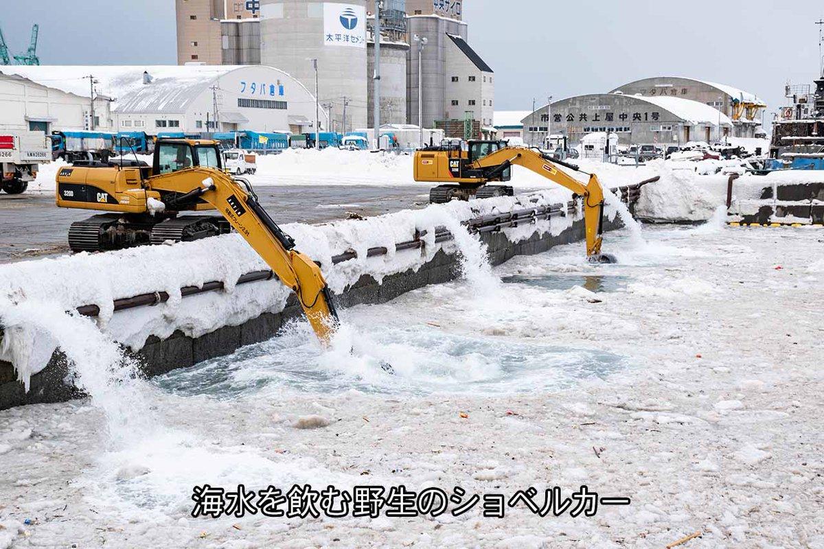 小樽総合デザイン事務局さんの投稿画像