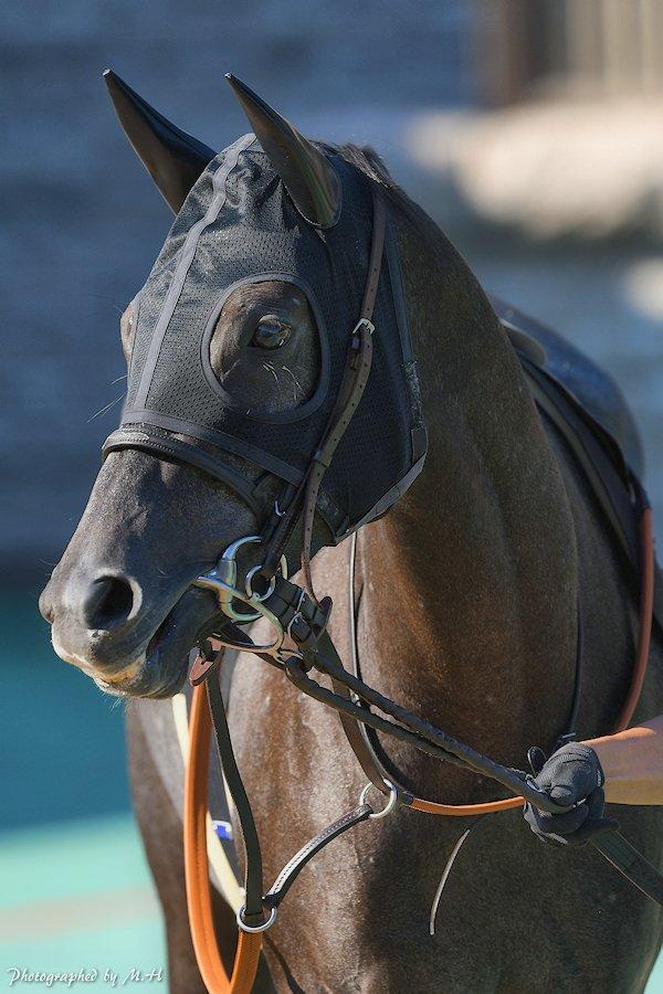 Horse Memorys's photo on クイーンカップ