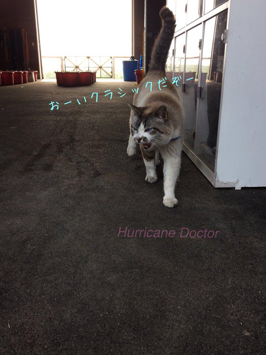 Hurricane Doctor DVM's photo on クロノジェネシス