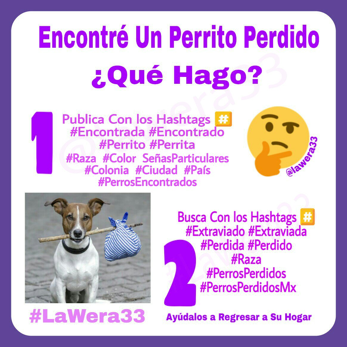🆘🐾Perros Encontrados🐾LaWera33's photo on #estoysoloencasay