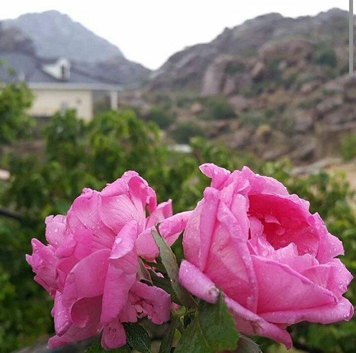 سارة👑.'s photo on #صباح_المطر