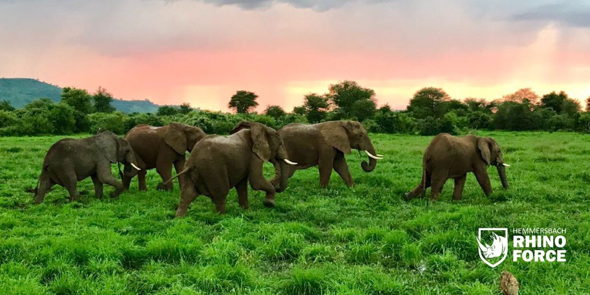 Thats the kind of encounter we love and the reason why we are here! A herd of elephants strolling by in the lush green Lower Zambezi Valley. #hemmersbachrhinoforce #antipoaching #zimbabwe #directaction #conservation #rhinoforce #savetherhino