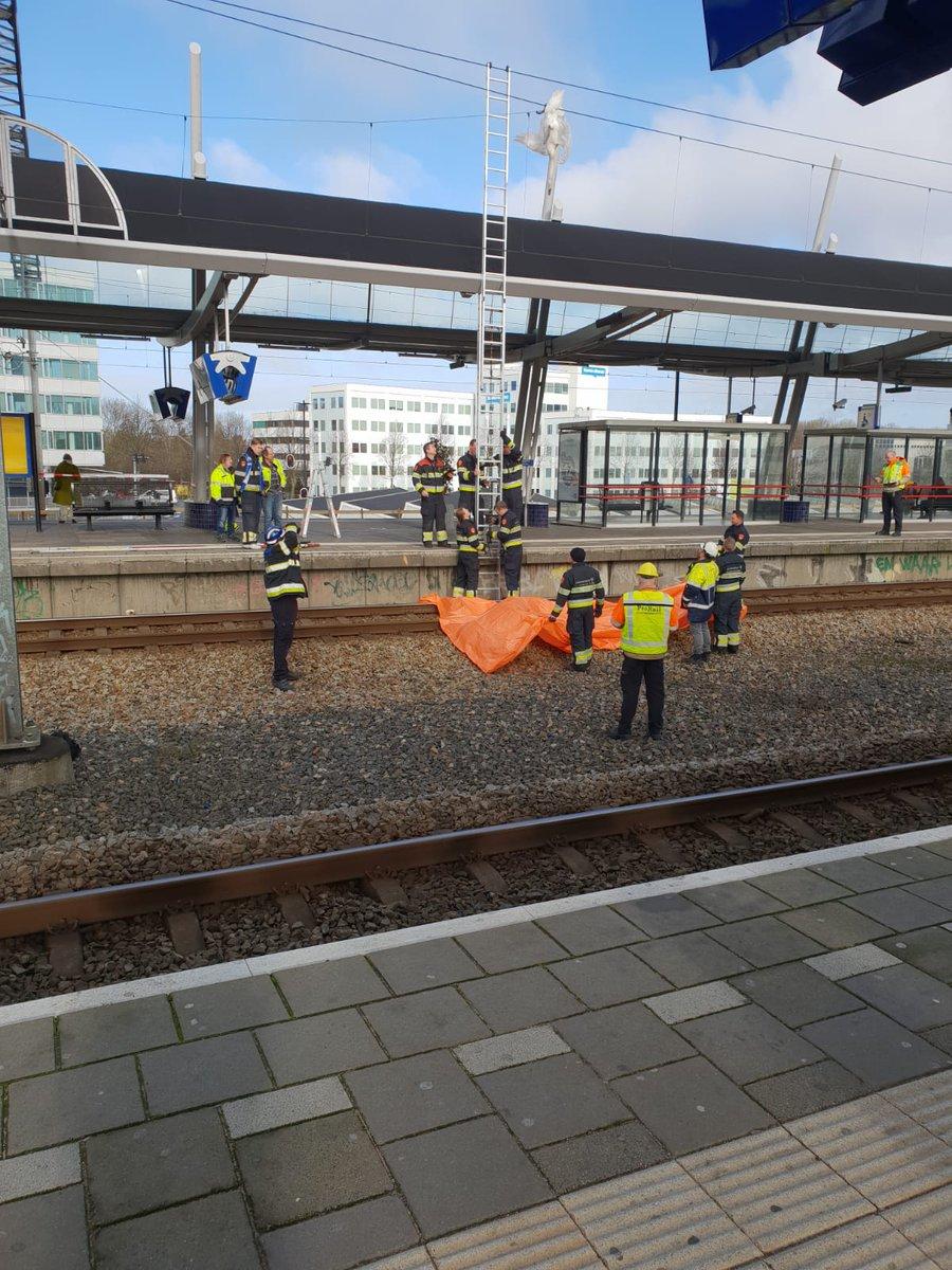 Zwaan verstrikt in bovenleiding van station Hoofddorp