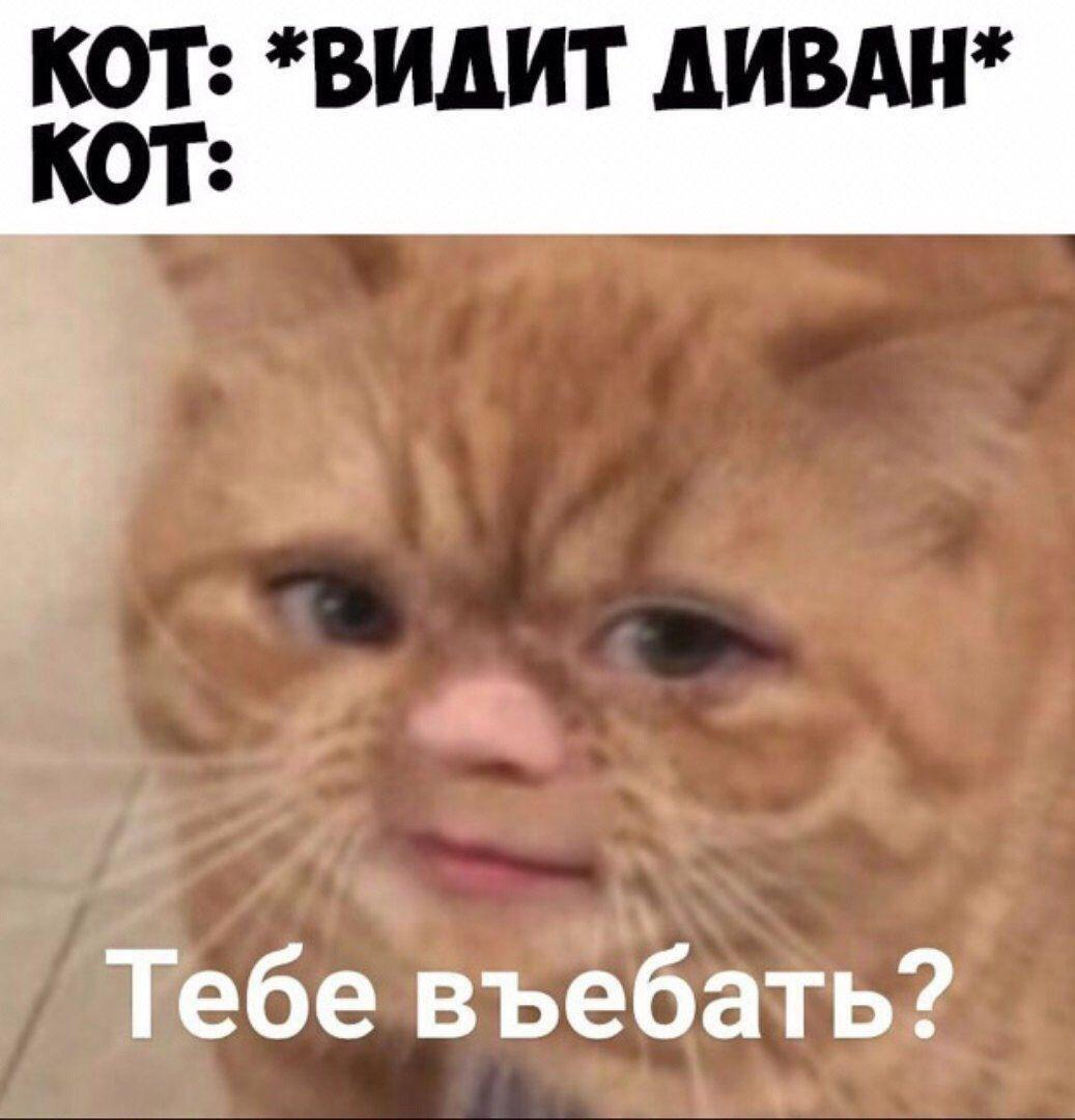 Russian Memes United On Twitter A Cat Sees A Sofa A Cat Should
