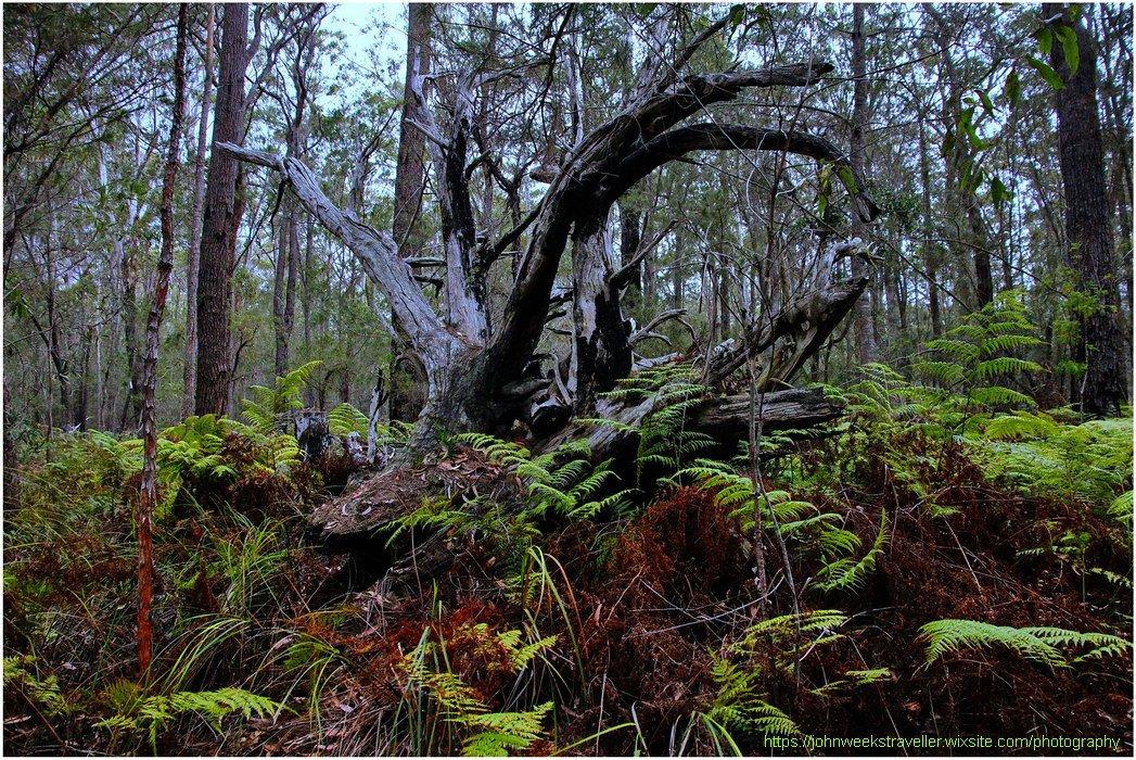 John Weeks Photography on Twitter: My Photography -  'Majestic Bushland' - Pambula, NSW, Australia . . .  #bushland #Pambula #outback #photography #mywork #myphoto #photo #foto #image…