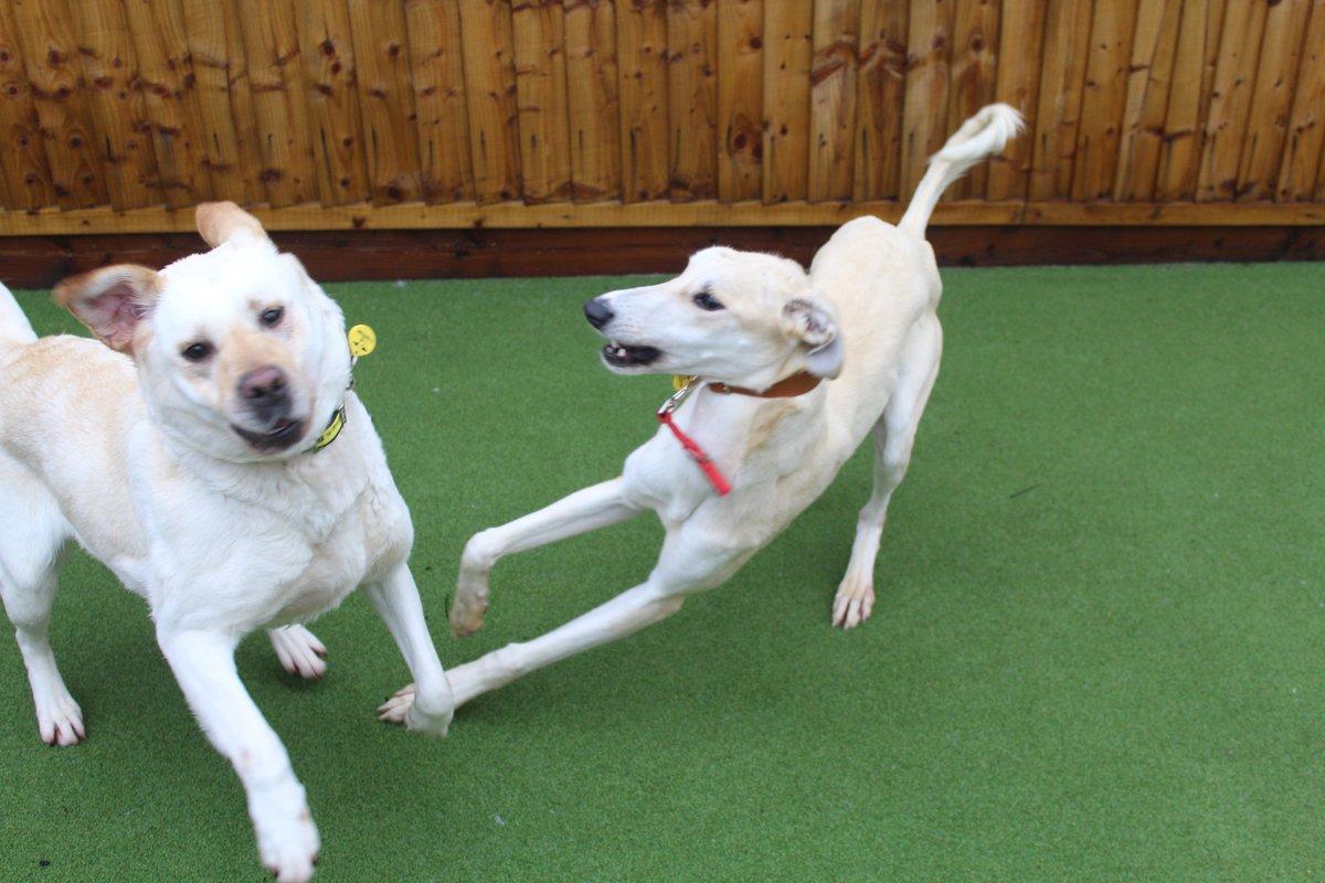 Dogs Trust Newbury's photo on #NationalMakeAFriendDay