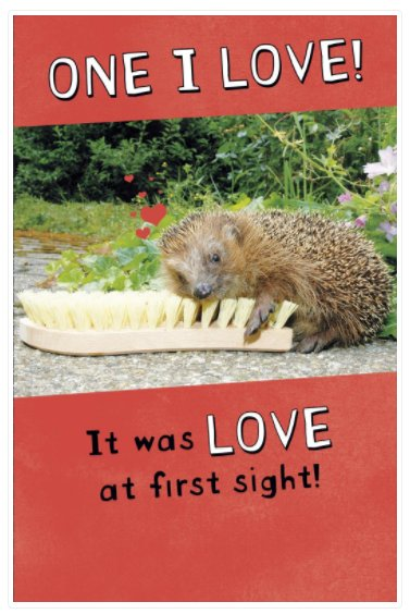 #MondayMotivation ...order my Valentine's Day Card! 😊 http://ow.ly/Y9oV30nEf2c    #valentinesday2019#valentinescards #valentinesdaycards #valentines2019 #valentines #onlinecardshop #onlineretailer #buycards #funnyvalentines #funnycards #funny #loveatfirstsight #hedgehog