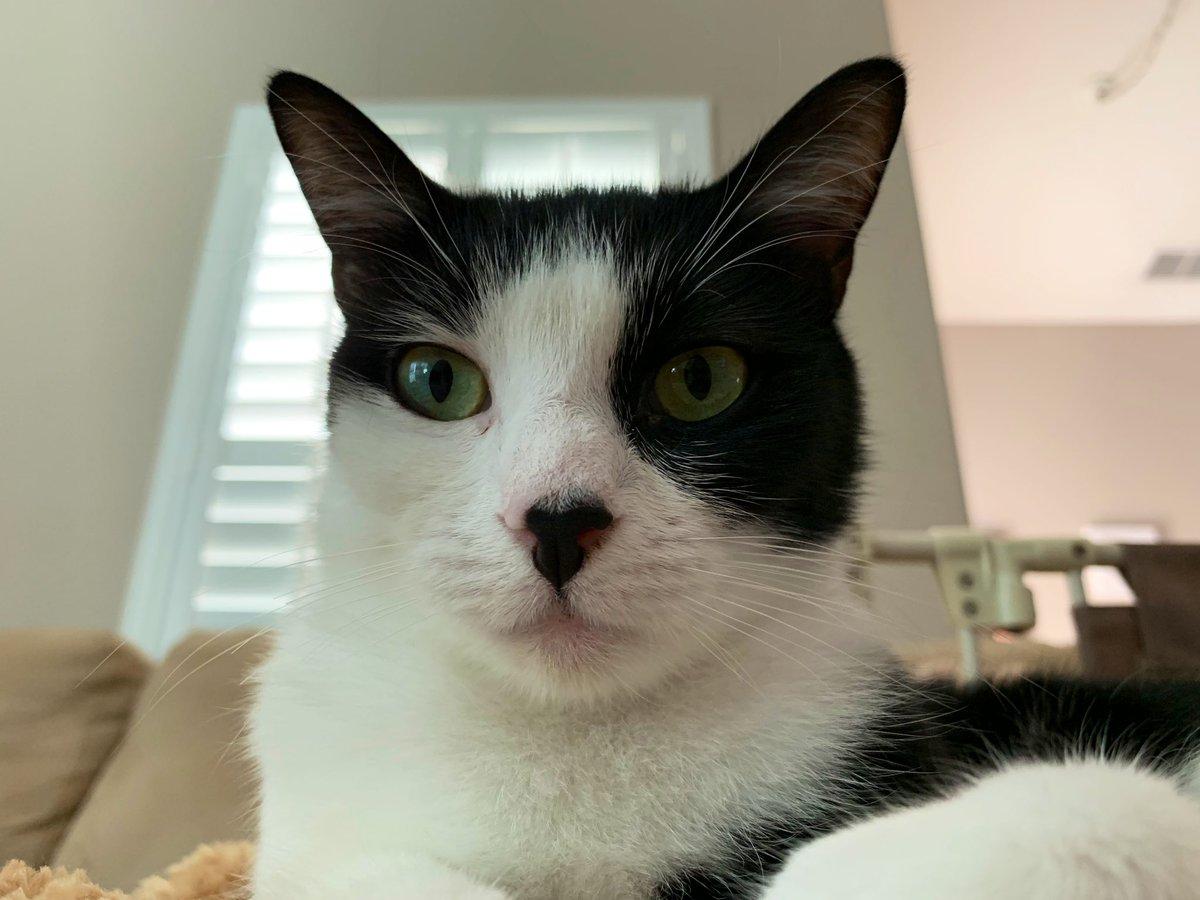 Marley Cat & Cleocatra's photo on Hello Monday