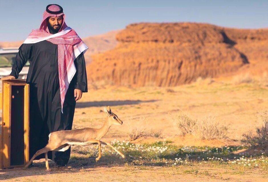 َّ's photo on #ميناء_الملك_عبدالله