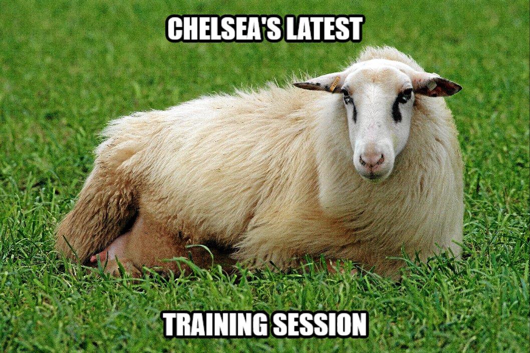 Thrashing session
